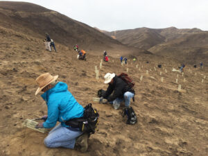 Volunteers replant vegetation after a 2015 fire in the Sage Hills - photo provided